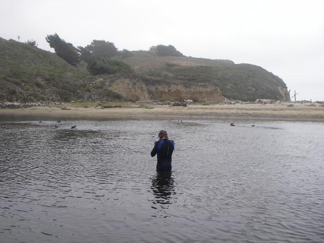 Fish-ID-snorkel