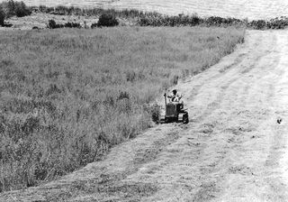 Mowing with a tractor in the field where the riding ring is currently located