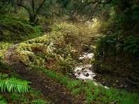 Creekside_trail_2